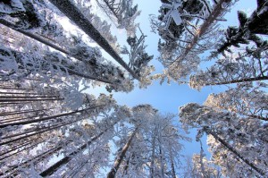 Даешь лыжню, или единение с природой в выходной
