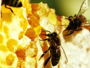Ислам: о пользе мёда