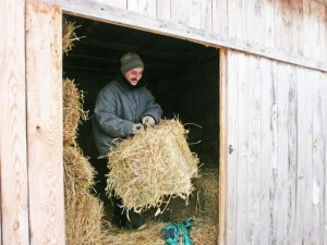 Сено для лечебных лошадей