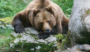 Медвежья дружба