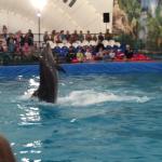 Дельфины детям