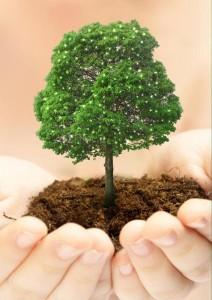 Соверши благое – посади дерево!